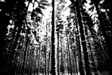 Frischer Schnee im Wald