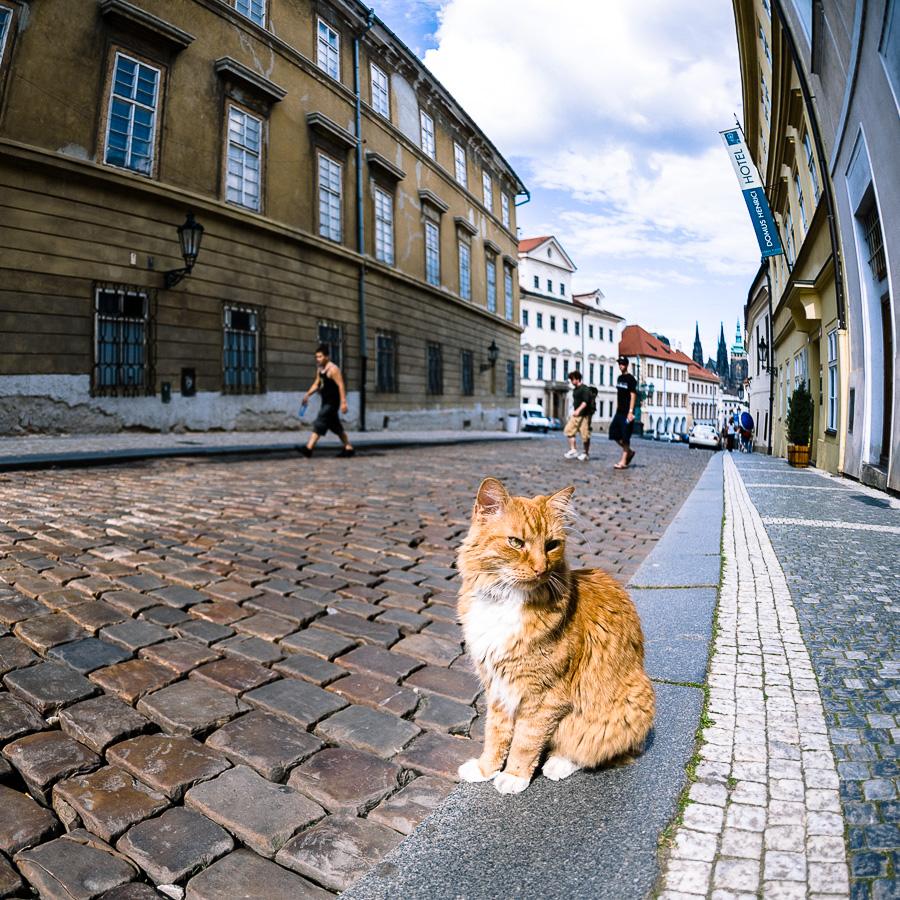 Streetphotography mit Katze - mehr Internet geht nicht