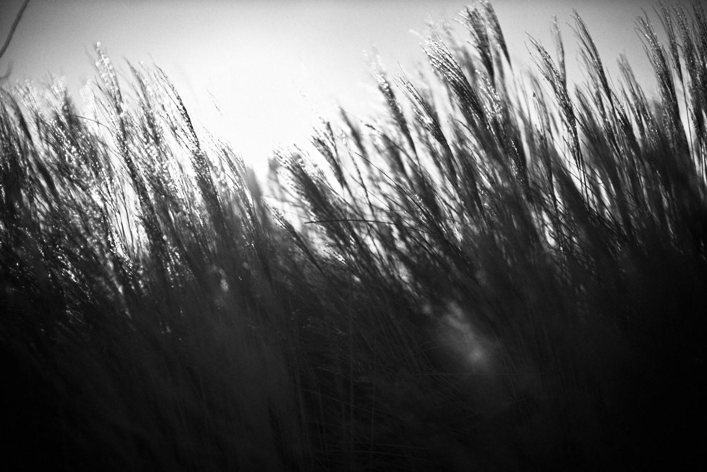 Gräser vor Sonne digital fotografiert