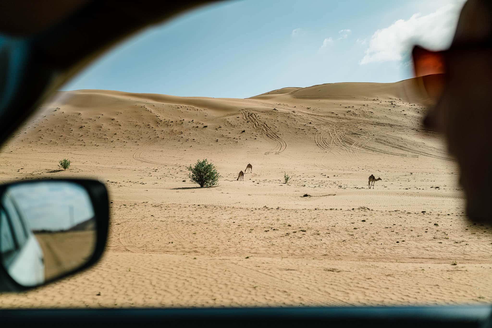Ein letzter Blick auf die Dünen von Wahiba Sands